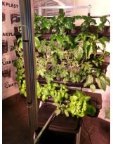 Vertikální hydroponický systém - jednostěn malý - 1SM s osvětlenímí